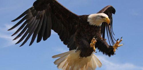 Historias que contar Garra de Aguila